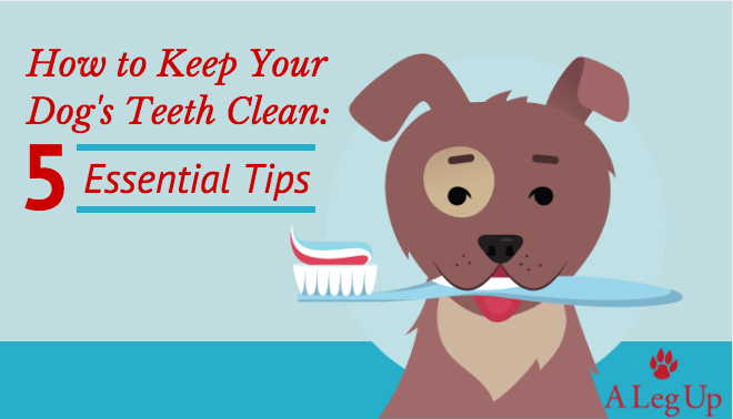 How-to-keep-dogs-teeth-clean