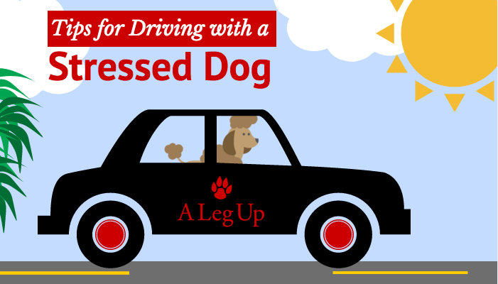 Title Image - Tips for Driving with a Stressed Dog - Black Car with Dog Riding Inside