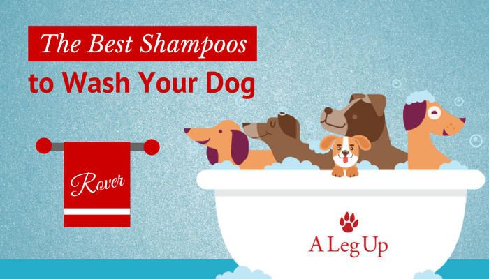 the-best-dog-shampoo