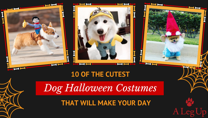 Pictures of Dogs in Halloween Costumes
