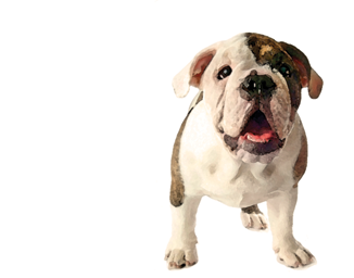 A Leg Up Doggy Day Care and Pet Sitting